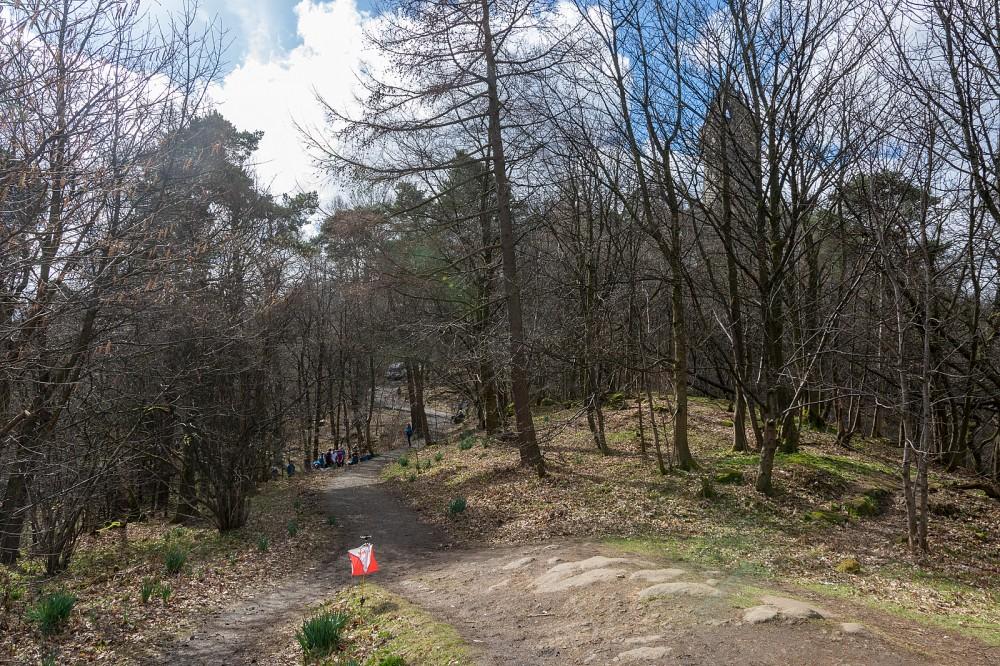 Woods at Abbey Craig