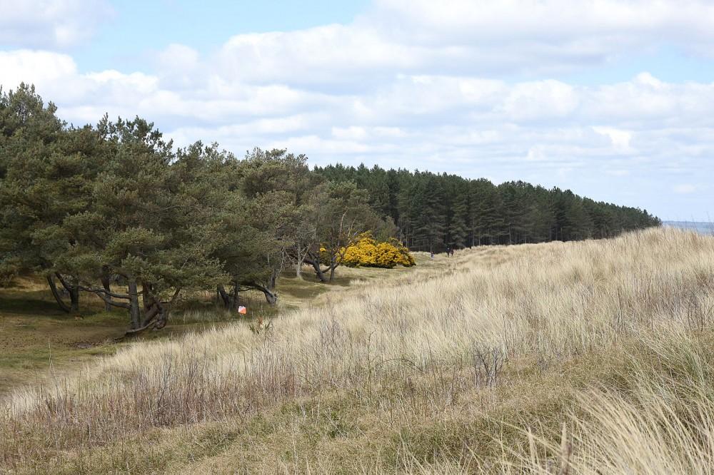 Tentsmuir Forest, looking N