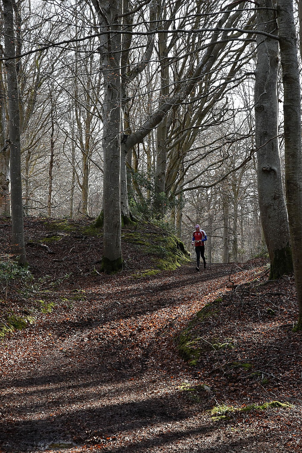 Track through beech forest