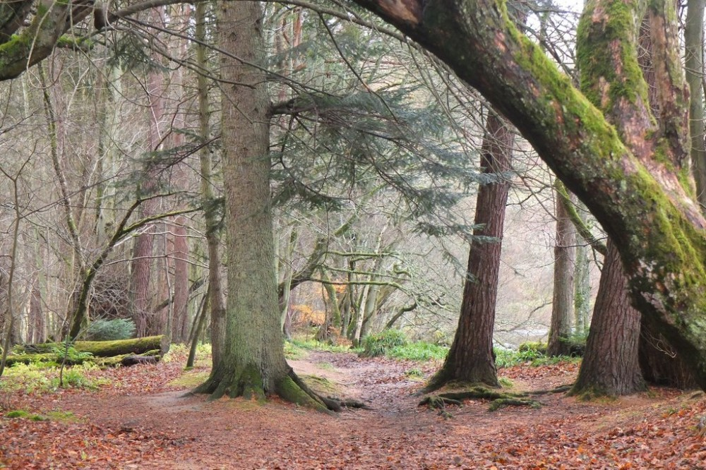 South Park Wood - path on south bank of the River Tweed