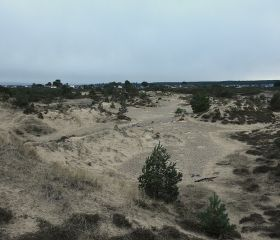 Findhorn dunes - view NW, Crawford Lindsay