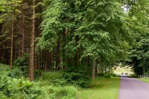 Dalmeny - Estate road and woods in the east of the area, Sally Lindsay